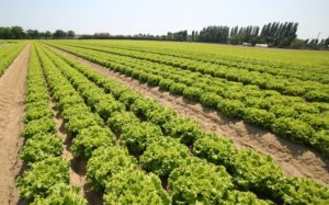 Cover photo for COVID-19 Resources for Fruit and Vegetable Producers