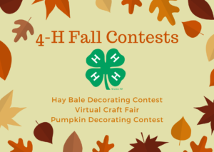 Cover photo for Fall 4-H Contests!
